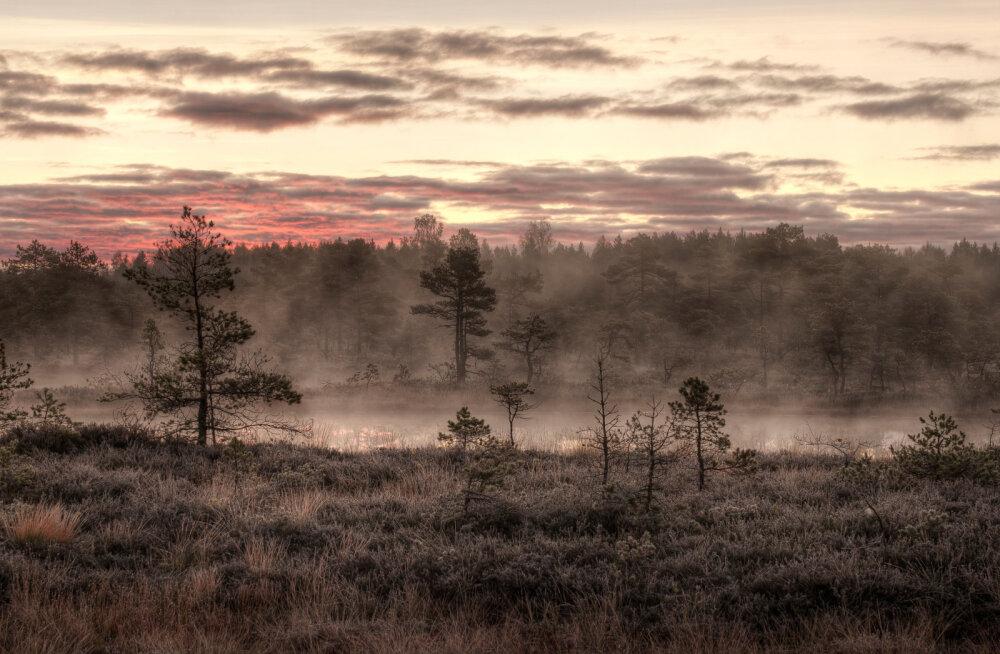 Vikipeedia kogub pilte looduspärandist