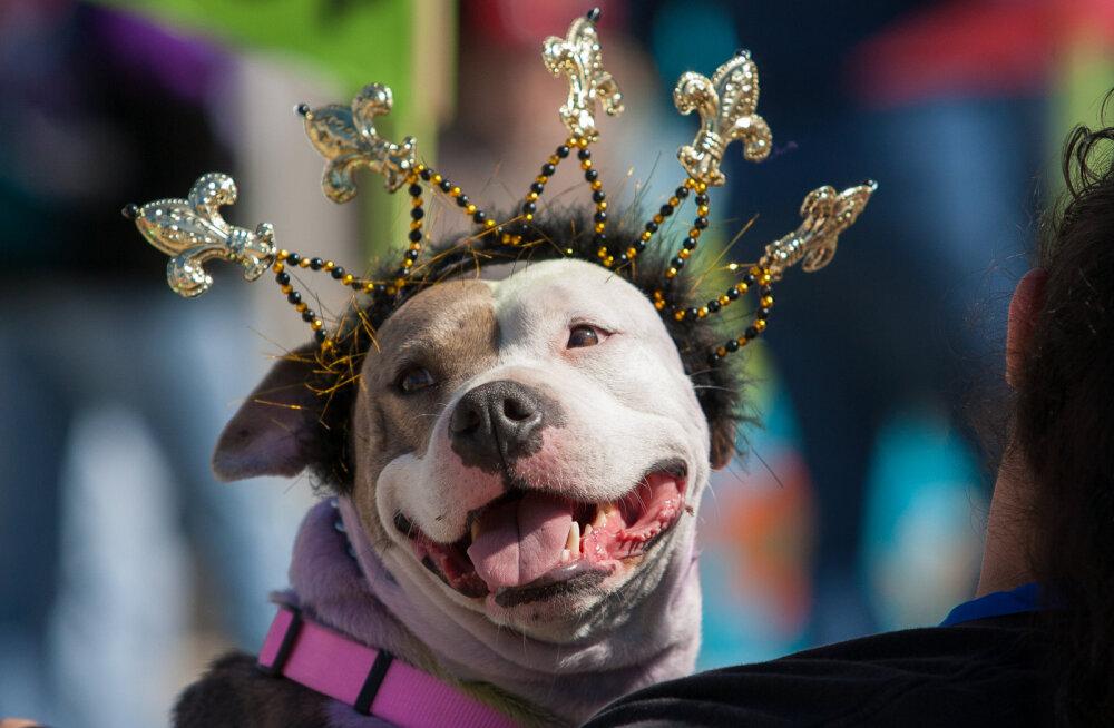 HÕISSA, PIDU! Täna on rahvusvaheline lemmikloomade riietamise päev!