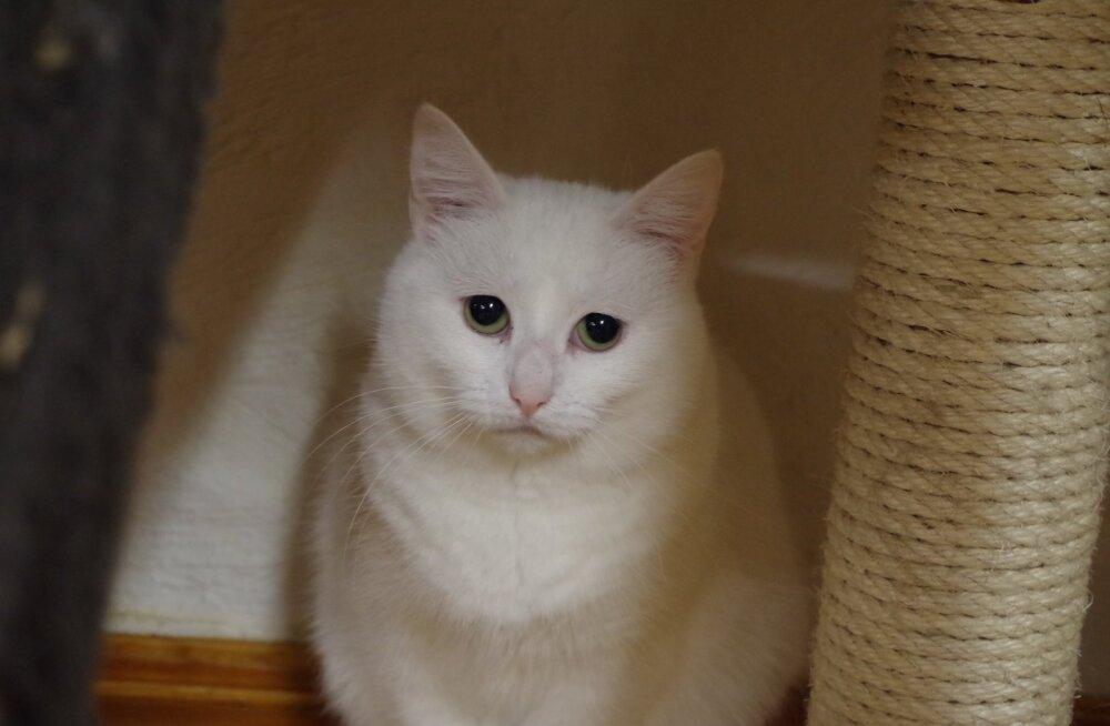 KOOKOS VAJAB ABI | Kodutu kass igatseb kodusoojuse ja hoolitseva omaniku hellituste järele