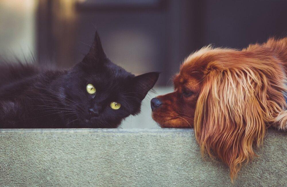 Nädalavahetuse TEST | Saa teada, kas oled oma loomult pigem koera või hoopis kassi moodi