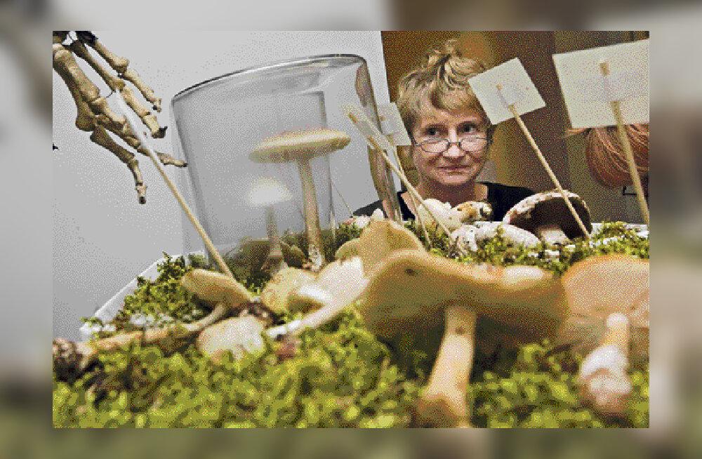 Loodusmuuseumis saab õppida seeni