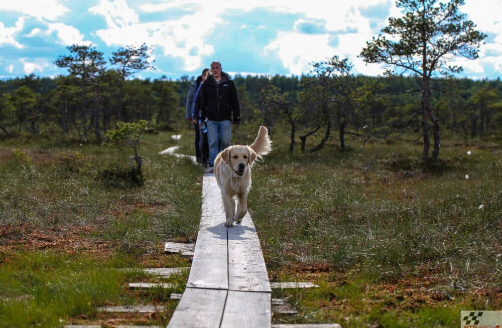 Abiks automatkajale: Loode-Eesti turismikaart, mida saab i-punktidest tasuta
