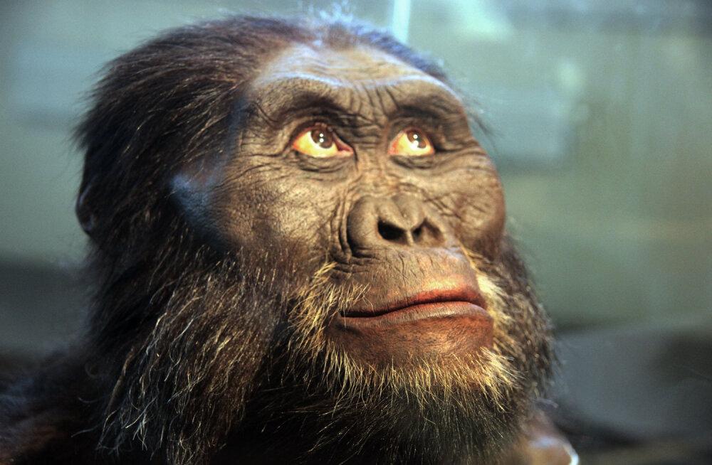 Esimene inimlane, kes kivist tööriistu kasutas, nägi välja tõenäoliselt selline