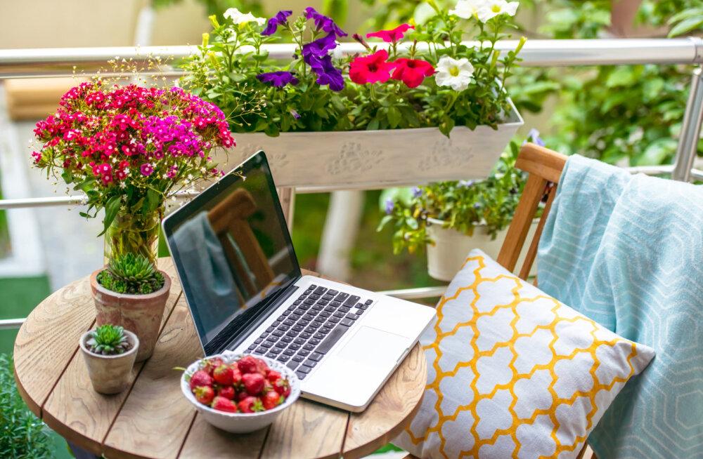 Taimed, mis aitavad luua koju head energiat, rahu ja puhast õhku