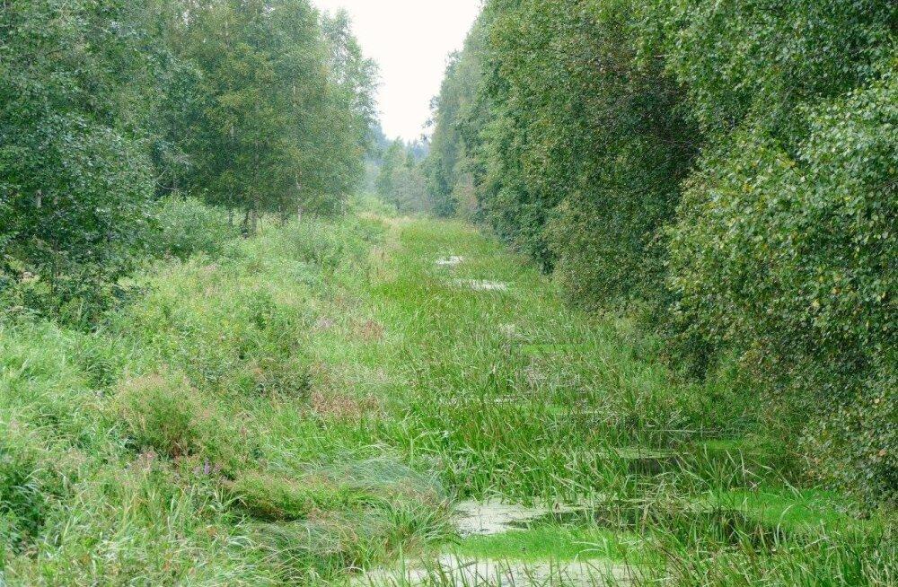Miks on Vääna jõest saanud peenar?