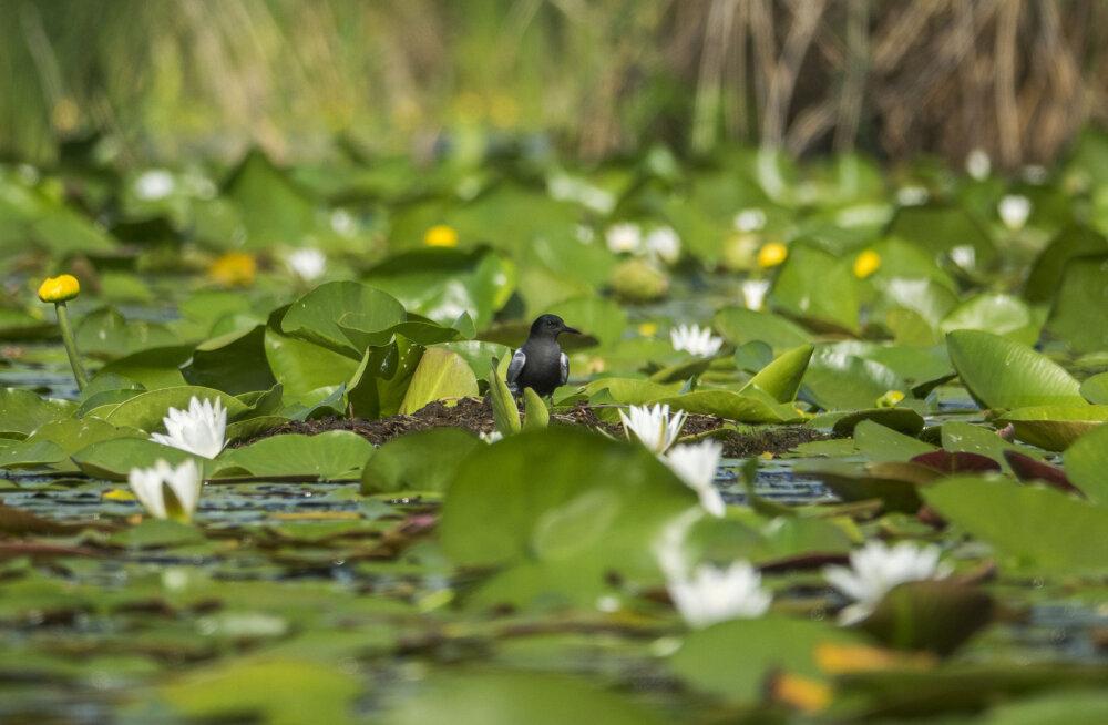 Повыть с собакой Баскервиллей: Топ-5 лучших болот мира