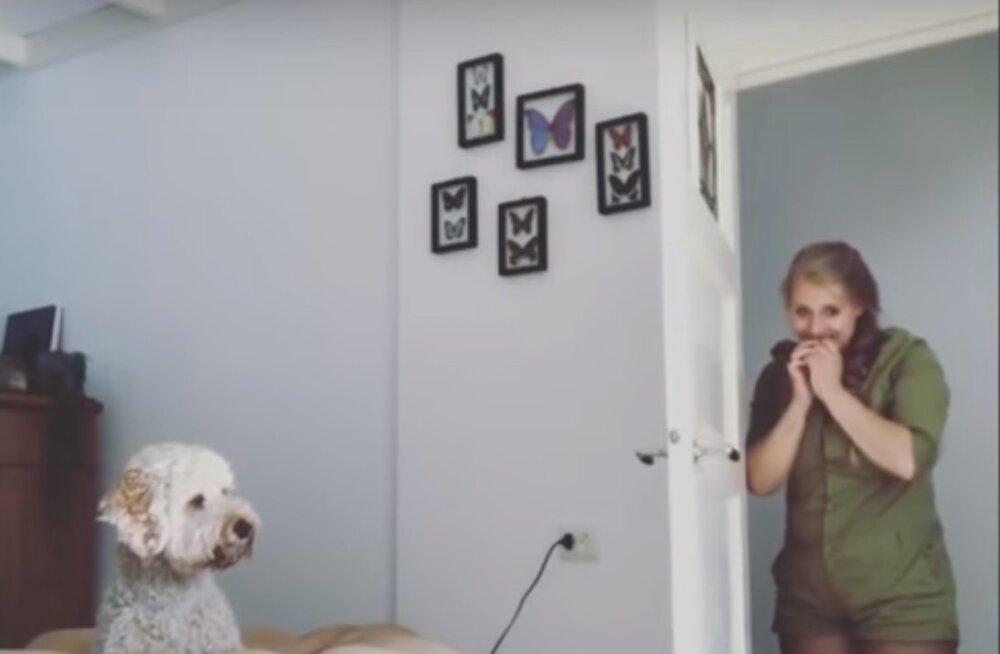 EKSPERIMENT | Internet on uuest trikist hullumas: kuidas reageerib koer, kui sa äkitselt ära kaod?