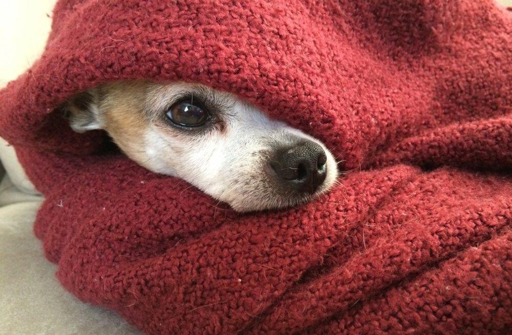 Aastaid leinas olnud koer tundis ühtäkki lõhna, mille sarnast ta arvas, et enam kunagi ei tunne - tema reaktsioon oli liigutav
