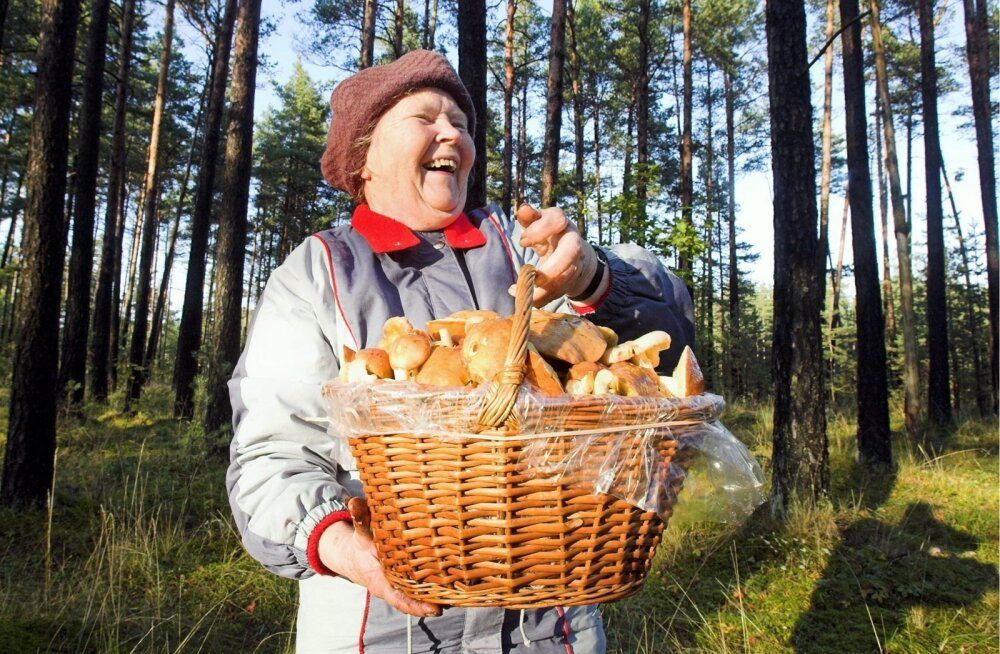 Ждать ли в этом году урожай грибов и когда идти их собирать