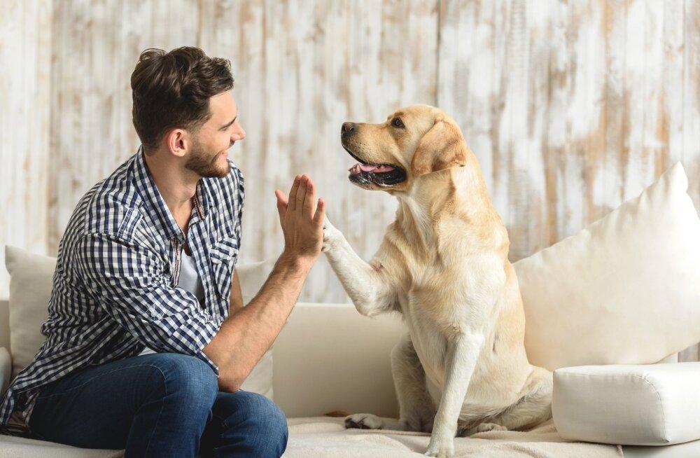 Koer ulatab abikäpa! 5 head moodust, kuidas koer aitab sinu uue aasta lubadusi pidada