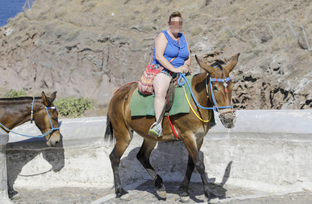 На Санторини решили защитить ослов от полных туристов