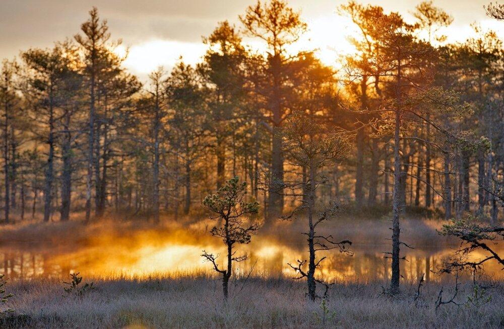 Предсказатели погоды на редкость единодушны: Рождество в Эстонии будет снежным!
