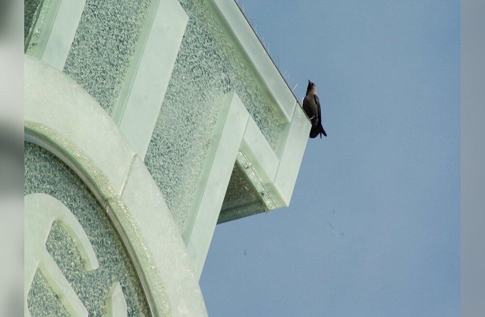 lind Vabadussõja võidusambal