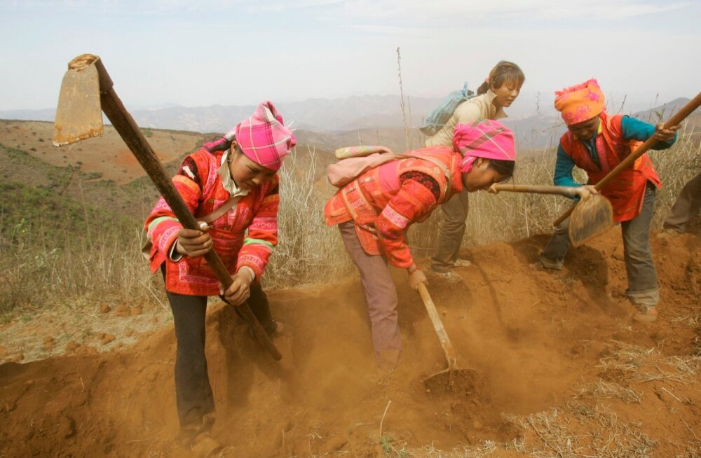 Ethnic Yi women plow field to plant mulberry on a hillside on the outskirts of Kaiyuan, Yunnan