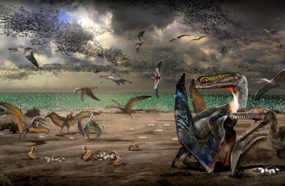 Üle 200 ürgmuna üheskoos: pterosaurusemunade rekordleid lubab järeldada, et lendsisalikud elasid kolooniatena