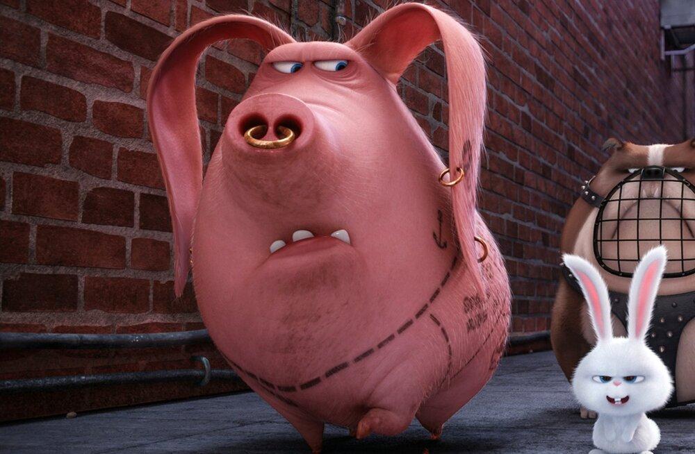 Kas multikategelane, tätoveeritud siga Tattoo on päriselt olemas?