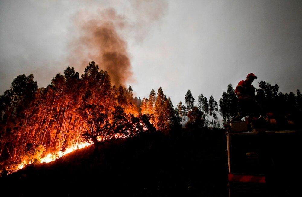 Portugali metsapõleng