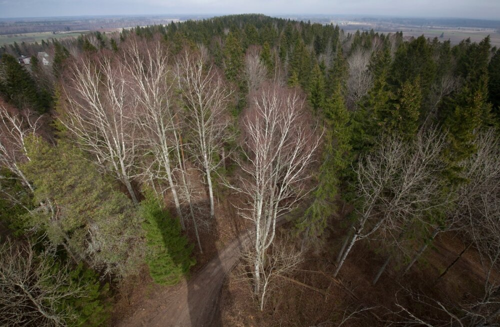Alutaguse rahvuspark, vaade Iisaku vaatetornist.