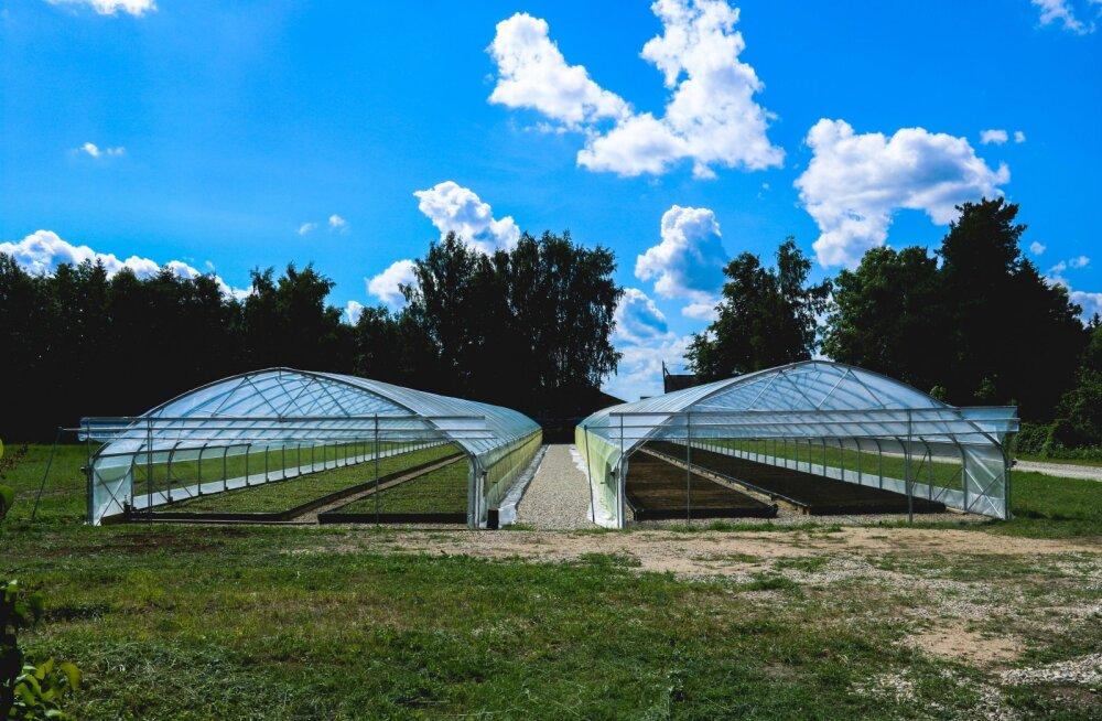 Suurimaks metsaistikute kasvatajaks pürgiv ettevõte avas Tartumaal uued kasvuhooned