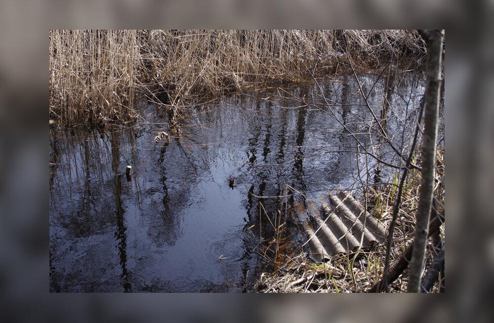 Linnuvaatlejad leidsid jõelt röövpüünised