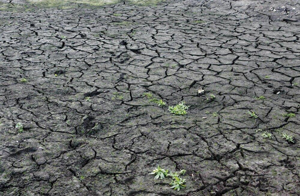 Kui nii edasi läheb, ei kuiva vaid taimed peenral, vaid ka järved.