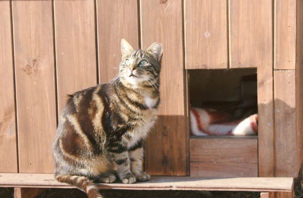 Riia kodutud kassid saavad endale uhked varjualused