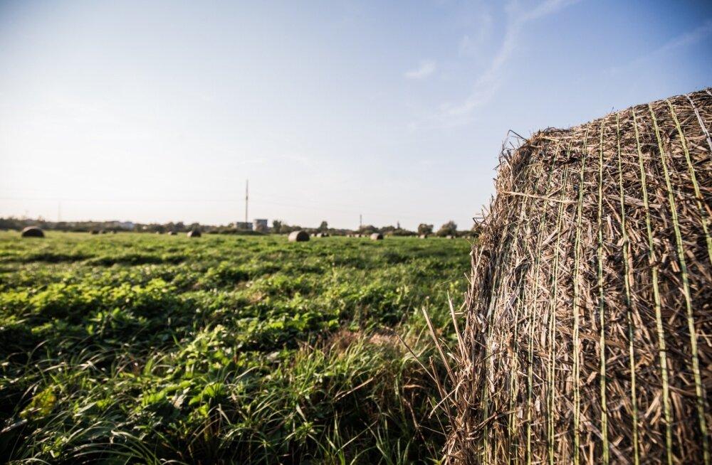 Loe, mida uut toob järgmise aasta riigieelarve põllumajandusele
