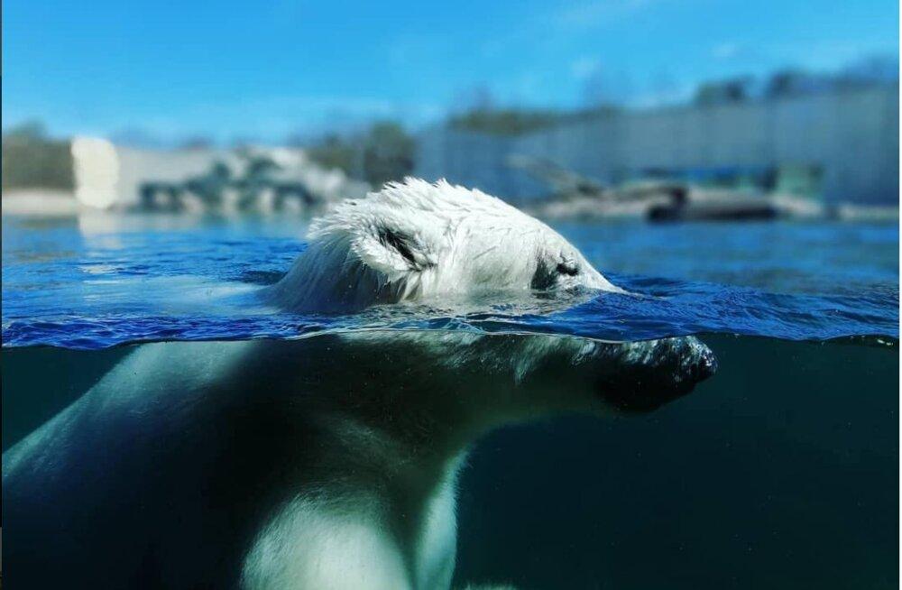 FOTOD   Mida teevad selle palavusega Tallinna loomaaia asukad?