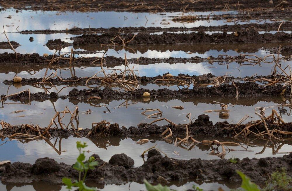 Vesine kartulipõld,kartulipõld,