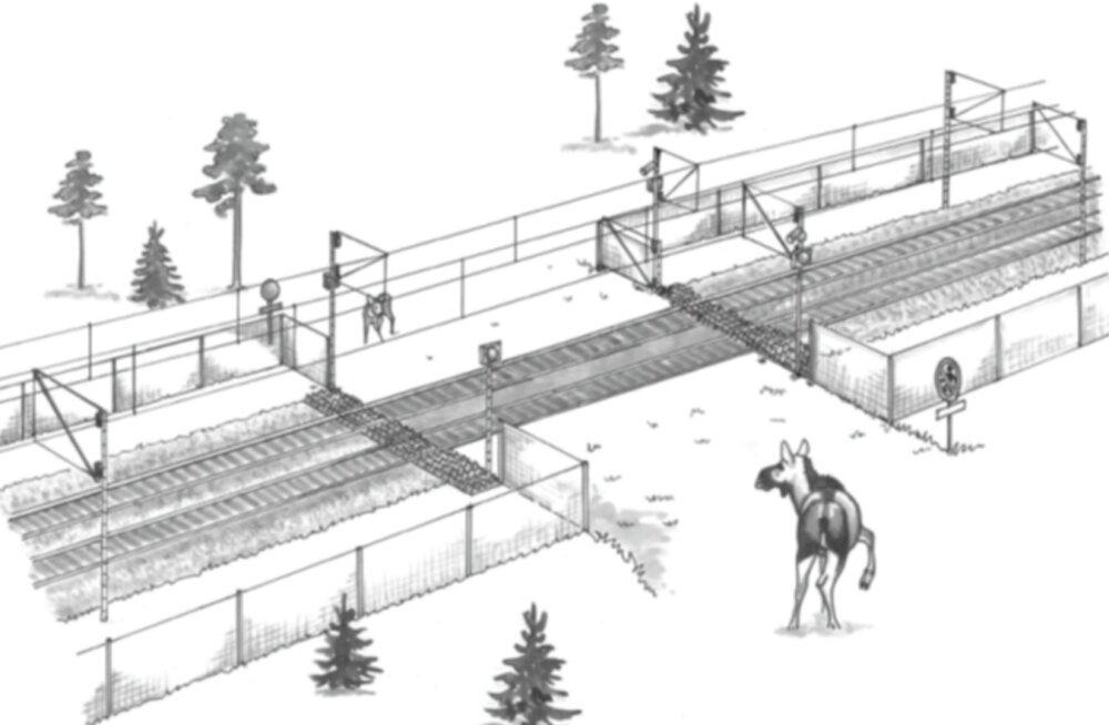 Rail Balticu trassile kavandatakse metsloomade tarbeks veerandsadat ökodukti, kuid kolmandik trassist võib jääda tarastamata