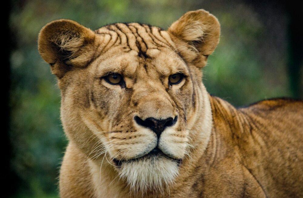 TEST | Kes sa oma hingelt oled? Vaata järele, milline majesteetlik loom on sinu hingesugulaseks!