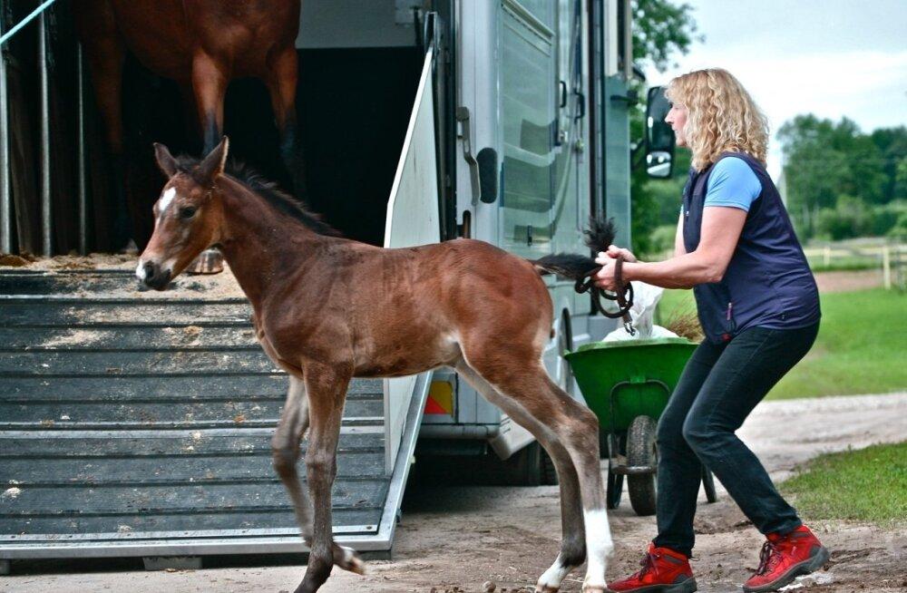 Ulvi Martin naudib nii õpetamist kui hobustega tegelemist.