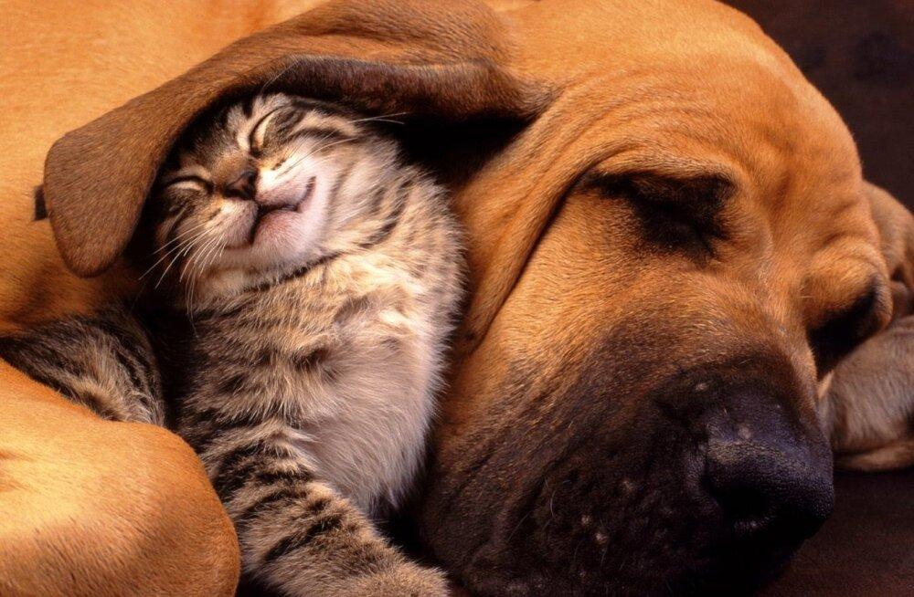 Lõbus TEST │ Kas oled kassi- või koerainimene?