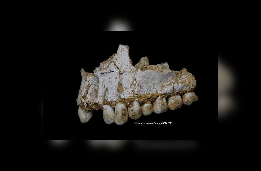 Ilmneb, et ka neandertallased sõid seeni ja kasutasid ravimtaimi
