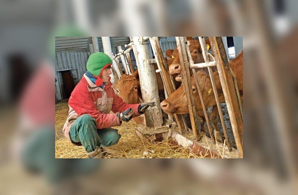 Töö teeb õnnelikuks ja paneb lehmadele laulma