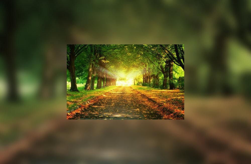 Mõista, et sina ei saa olukordi tegelikult mõjutada. Miski on küll sinu kätes, kuid suurelt jaolt läheb elu nii, nagu minema peab. Milleks siis muretseda? Kas tunned, millise vabaduse selline mõte loob?