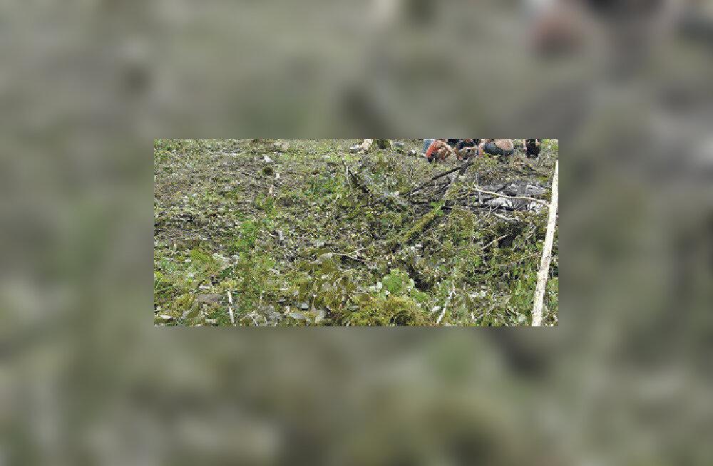 Haruldased metsad ohverdatakse Sotši olümpiatee heaks