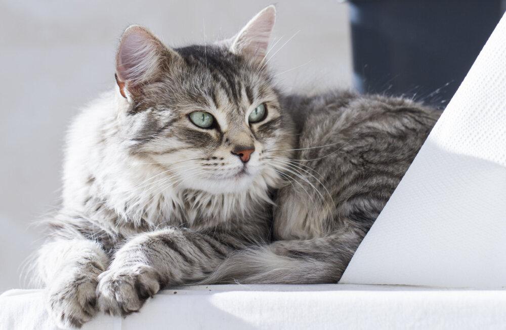 Seedimine, sinu kassi tervise tagatis