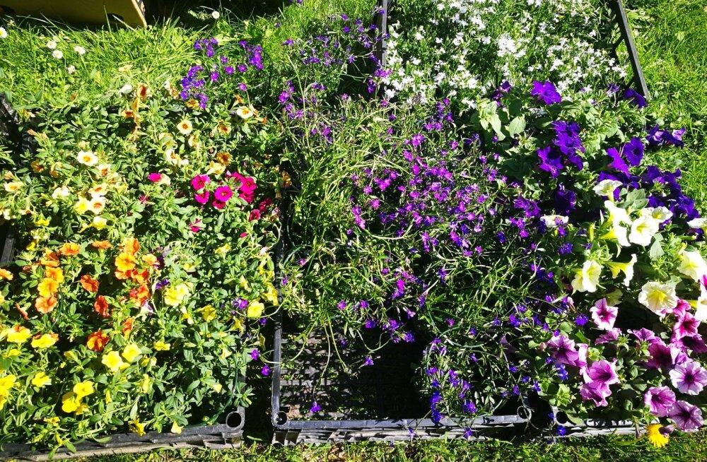 Umbrohufestivali eesmärk on tervislikust ja taimetoidust huvitatud inimestele tutvustada taimi, mis tavakokanduses eriti kasutust ei leia.