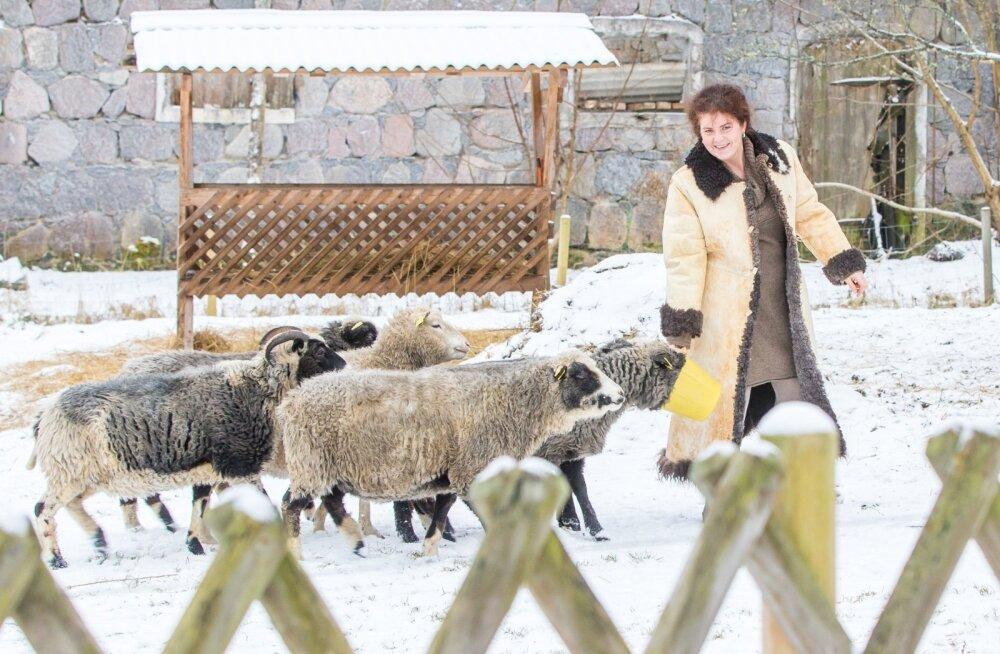 Kihnu maalammas on vana tõug, kes oma naha ja karvadega Eesti inimesi aastasadu soojas hoidnud. Made Uus tegi endale ise lambanahkse kasuka, et vanad töövõtted läbi teha ja neid kirjeldada.