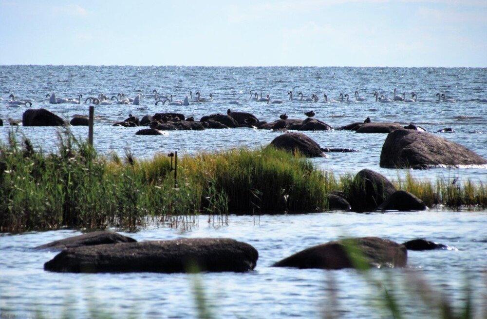Leili metsalood   August mere ääres