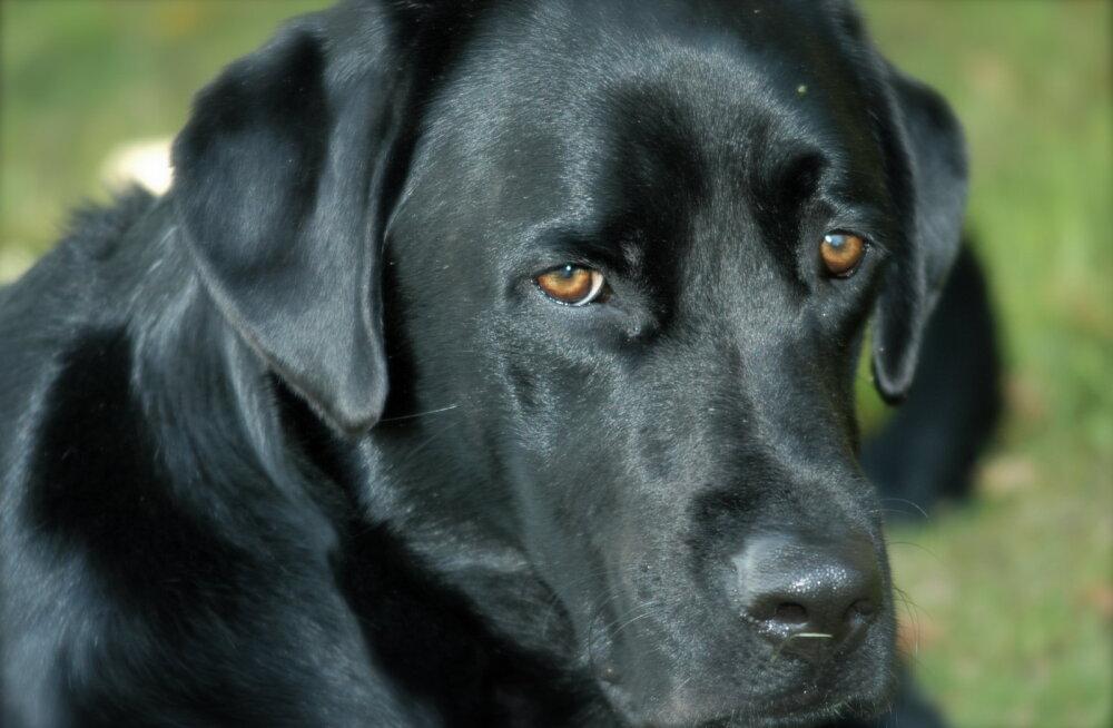 LOOMARASSISM EESTIS: Musta värvi loomad endale naljalt uut omanikku ei leia