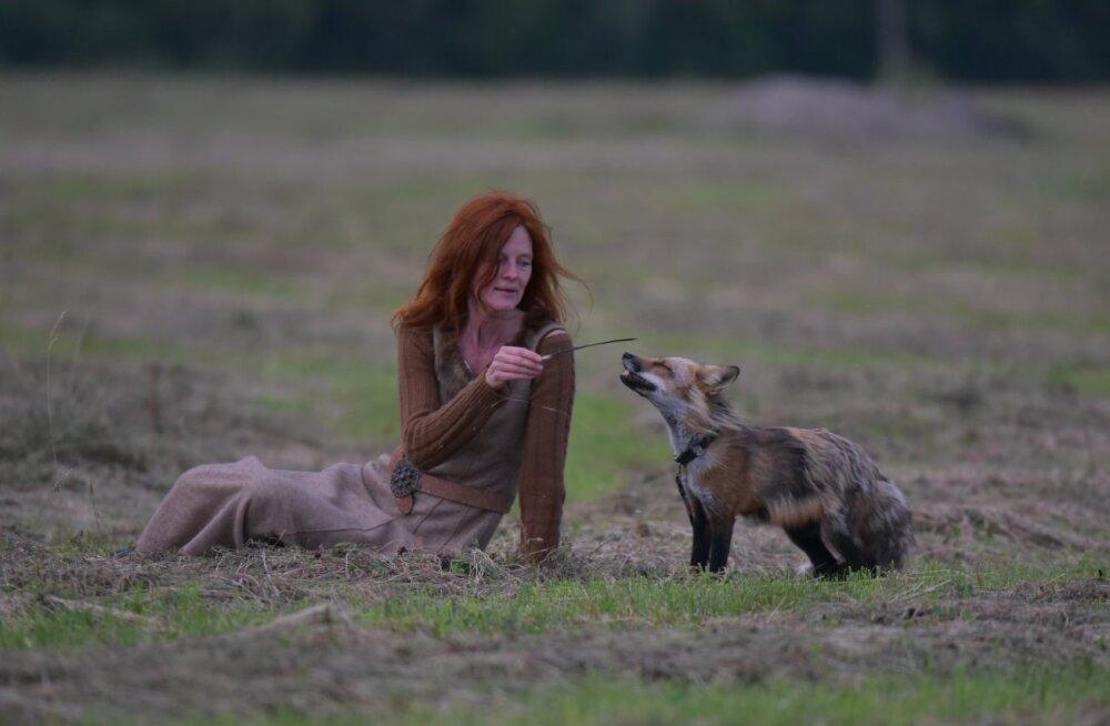 Rebane kui hingeloom, teejuht ja sõber: Pärnumaal elab naine, kes jagab oma kodu rebasega