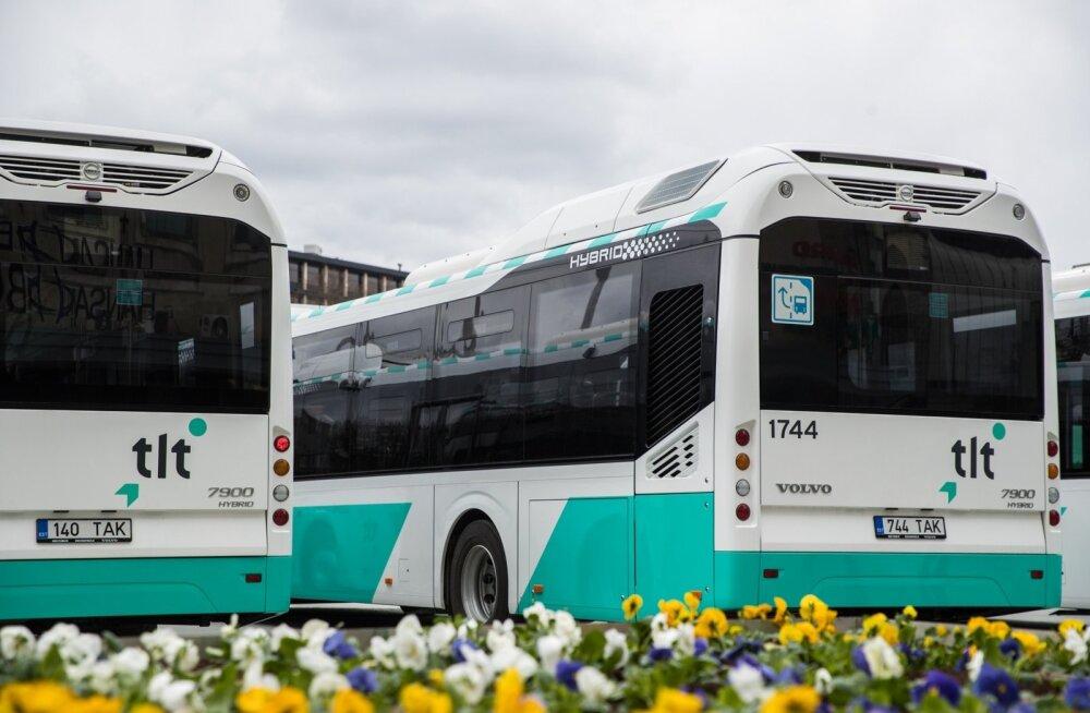 На время Дней моря открывается автобусная линия 81