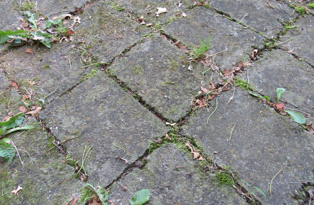 Kuidas kõige lihtsamalt puhastada kiviplaatide vahelt umbrohtu?