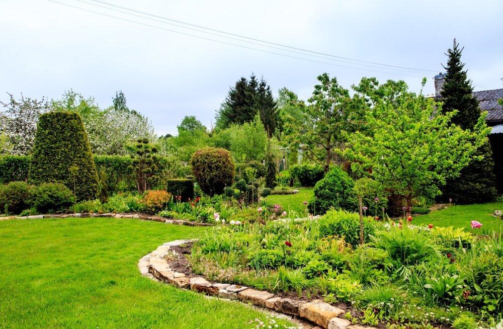 Reiu talu aed
