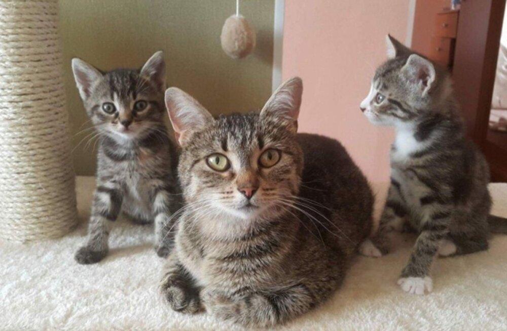 Selle kassiema nimi on Betty-Liis ja ta ootab koos poegadega kodupakkumisi hoiukodus. Vaata lähemalt siit: http://www.pesaleidja.ee/loomad/betty-liis-3813