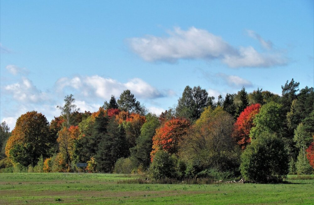 Leili metsalood   Oktoobrikuu värvid