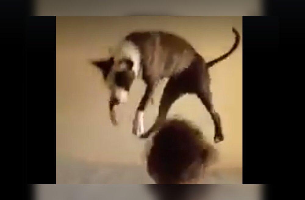 Naljakas VIDEO | Graatsiline sooritus! Vaata, kuidas väikesed lapsed koerale hüppamise selgeks õpetasid