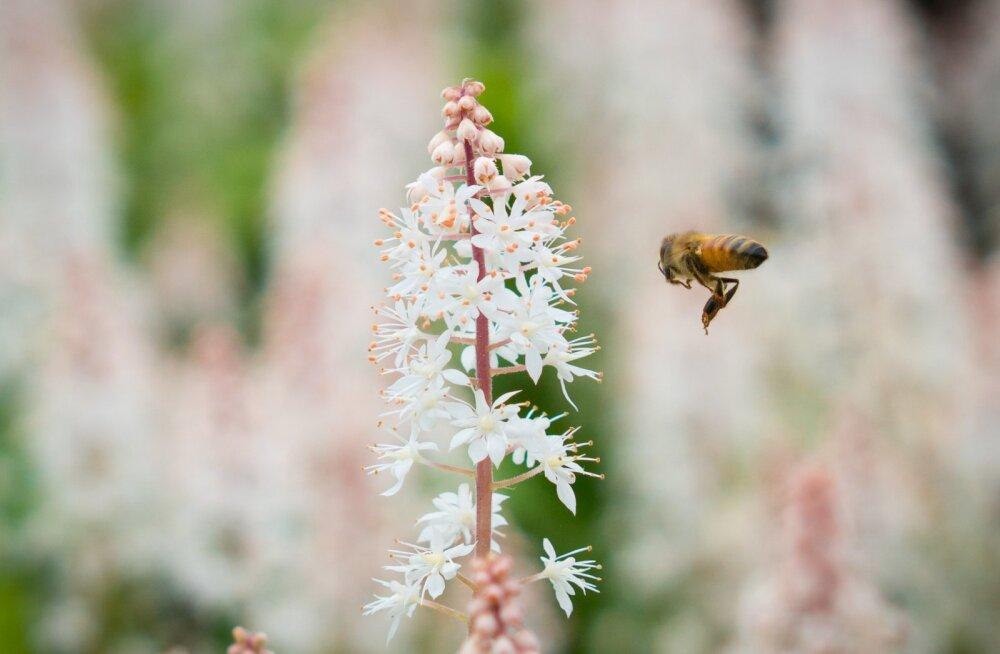 Kutseliste mesinike ühing: püüded õhutada vastasseisu mesinduse ja taimekasvatuse vahel on lühinägelikud ning päevapoliitiliselt motiveeritud